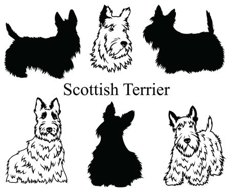 Scottish terrier set. Collection of pedigree dogs. Black white illustration of a scottish terrier dog. Vector drawing of a pet. Tattoo.