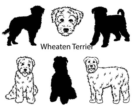 Wheaten terrier set. Collection of pedigree dogs. Black white illustration of a wheaten terrier dog. Vector drawing of a pet. Tattoo.