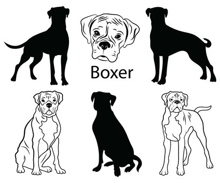 Boxer set. Collection of pedigree dogs. Black white illustration of a boxer dog. Vector drawing of a pet. Tattoo.