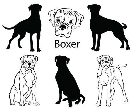 Conjunto boxer. Colección de perros de pedigrí. Ilustración en blanco y negro de un perro boxer. Dibujo de una mascota vectorial. Tatuaje.