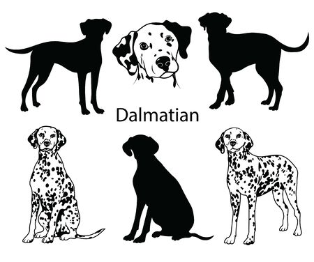 Dalmatian set. Collection of pedigree dogs. Black white illustration of a dalmatian dog. Vector drawing of a pet. Tattoo. 矢量图像
