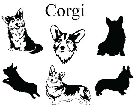 Set of corgi. Collection of pedigree dogs. Black and white illustration of a dog corgi. Vector drawing of a pet. Tattoo. Illustration