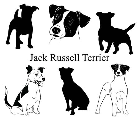 Set of jack russell terrier. Collection of pedigree dogs. Black and white illustration of a dog jack russell. Vector drawing of a pet. Tattoo.
