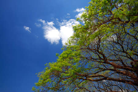 sunshines: Trees and sky