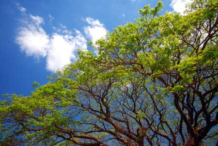sunshines: Branch