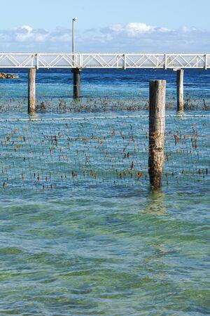queensland: Shark Net in North Stradbroke Island Queensland.