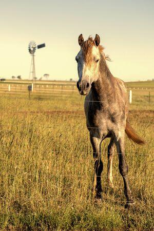 queensland: Horse in the countryside in Brisbane, Queensland.