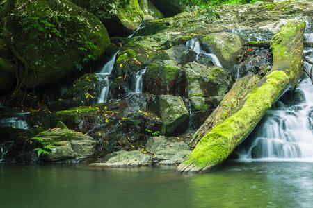 gondwana: Waterfall in Lamington National Park in Queensland, Australia.