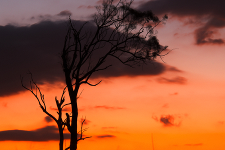 vibrant colours: Tree silhouette in Queensland with vibrant colours. Stock Photo