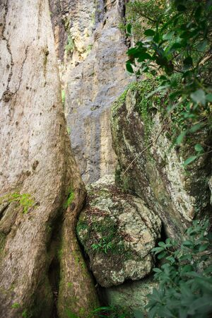 cliff face: Large cliff face on the way to Purlingbrook falls in Springbrook National Park, Queensland. Stock Photo
