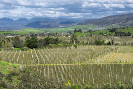 Farming field in Tasmania, Australia during the daytime.