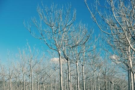 Hilera de árboles abstractos en un campo del país en la tarde.
