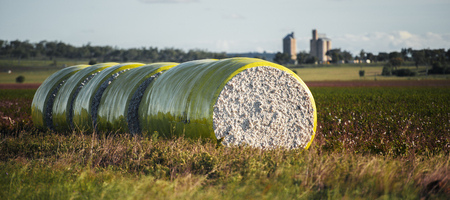 cotton bud: Round bales of harvested cotton wrapped in yellow plastic in Oakey, Queensland.
