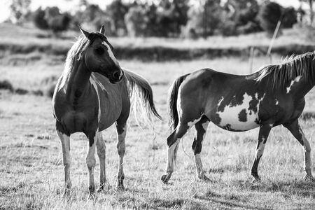 Horses in the paddock during the day Stock Photo