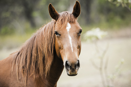 Australian horse in the paddock during the day Stock Photo