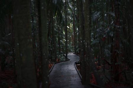 Boardwalk leading through the overgrown dark rainforest