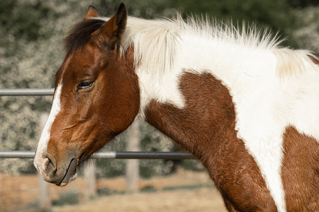 Horse in a countryside paddock during the day Stock Photo