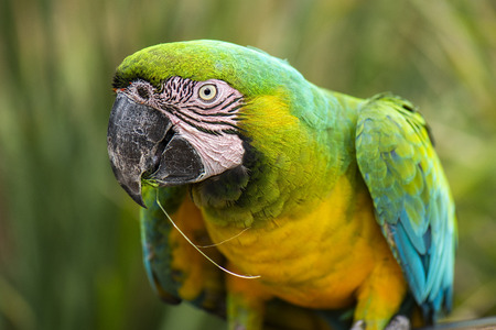 Close up of a beautiful macaw bird during the day.