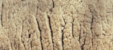Animal background view. Close up to natural sheeps fluffy wool. 写真素材