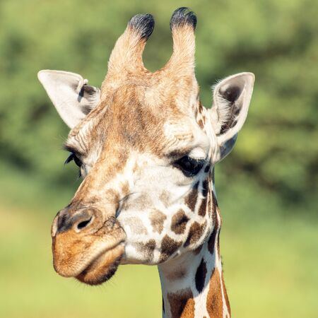 Giraffe outside in nature during the day time.