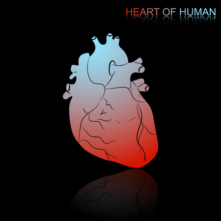 Vector illustration of human heart with a color transition and reflections with the inscription Human heart isolated on a black background.