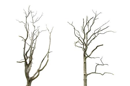 albero secco: Albero morto e secco Archivio Fotografico