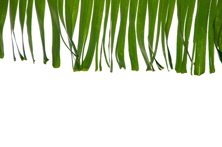 solated: solated banana leaf frame on white Stock Photo