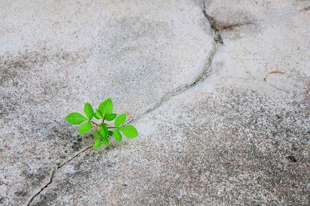 Growing plant on Cement photo