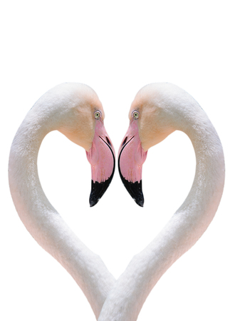 heart composed by two flamingos photo