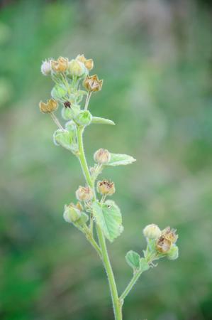 unidentified: Planta no identificada de Tailandia o la flor que crece en la naturaleza