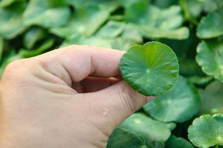 hand catch green leaf photo