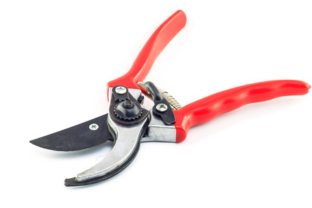 secateurs: Red garden secateurs isolated