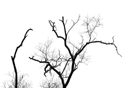 black and white dry tree isolated photo