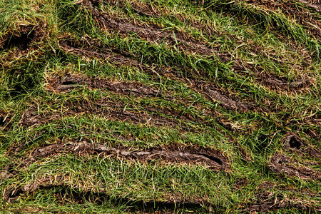 green grass texture background before plant photo