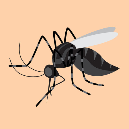 insect mosquito: mosquito Illustration