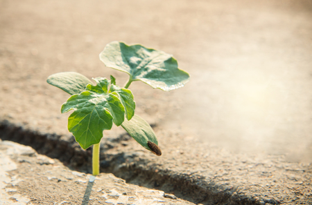 New life, weed growing through crack on concrete
