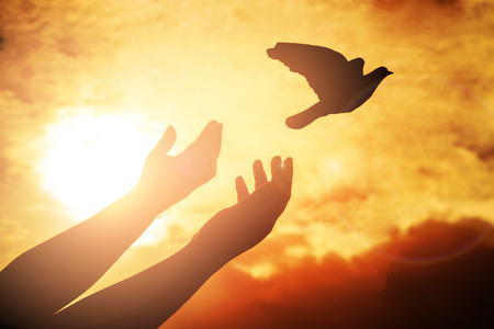 Man praying and free bird enjoying nature on sunset background, Human raising hands. Worship christian or freedom concept background. silhouette pigeon flying out of two hand and freedom concept and international day of peace.