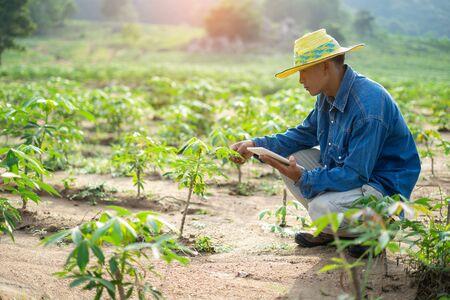 Compressa della tenuta dell'agricoltore dell'uomo d'affari che sta nel campo della manioca. Concetto di agricoltore intelligente.