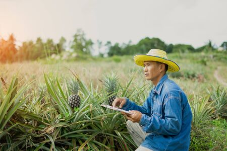 Businessman farmer holding tablet for checking in pineapple field. Smart farmer concept use technology internet and information for Decision. Zdjęcie Seryjne
