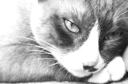 perverse: cat