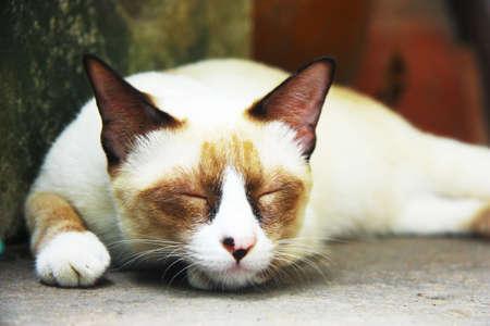 terrestrial mammal: cat