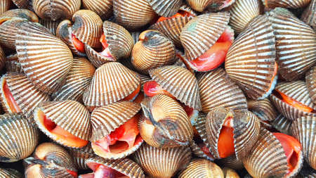 Scallops for sale in the market