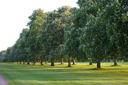 tree Stock Photo - 5622349