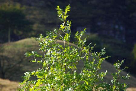 tree Stock Photo - 5688418