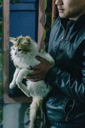 White and brown cat carried by man in in the night at Lachen in North Sikkim, India.