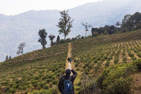 Tourist taking photo of farmers in Temi Tea Garden in winter near Gangtok. Sikkim, India.