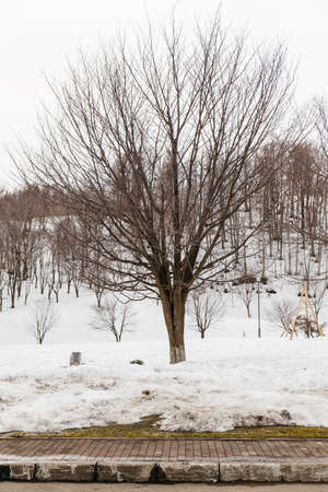 Leafless trees on the ground that covered with snow near Fukidashi Park in Hokkaido, Japan.