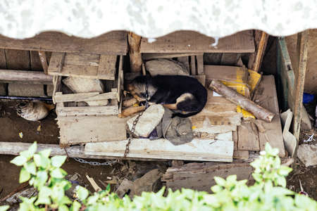 Chained dog sleep on wood panel under the roof with green plant on foreground in summer at Cat Cat Village in Sa Pa, Vietnam.