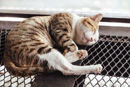 Sleeping black, brown and white fur cat on mesh steel floor with blurred background. Stock Photo
