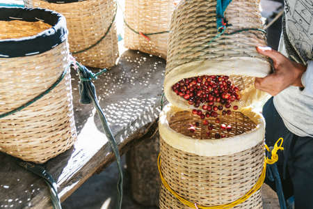 Farmer pouring hand picked ripe Red Arabica Coffee Berries in another basket in the Akha village of Maejantai on the hill in Chiang Mai, Thailand. Standard-Bild - 123194354